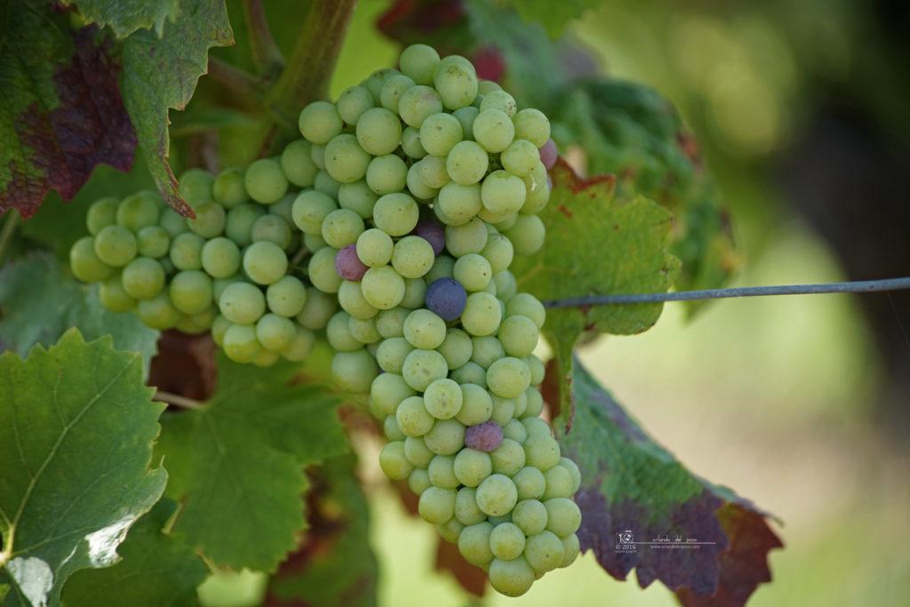 ernie's grapes