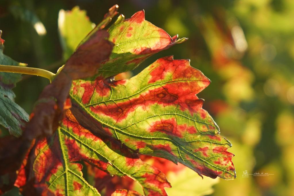 autumn_colours